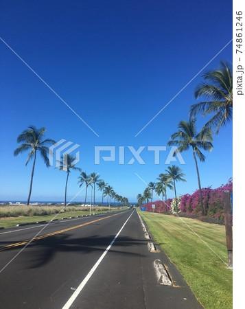ハワイ島の真っ直ぐな道路と椰子の木 74861246