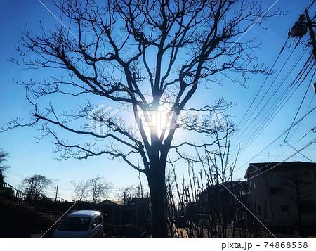 冬の青空と一本の枯れ木の枝の隙間から太陽が見える街並みの風景 74868568