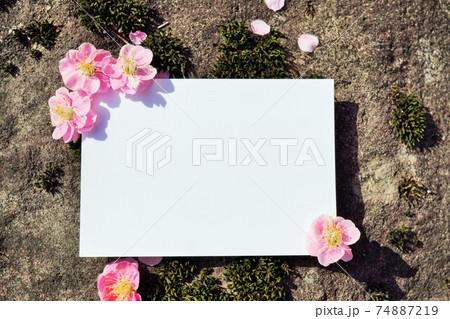 苔むした岩の上の紅梅で角をデコレーションされた白紙の長方形のカードのモックアップ 74887219
