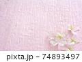 早春の桜の花 74893497