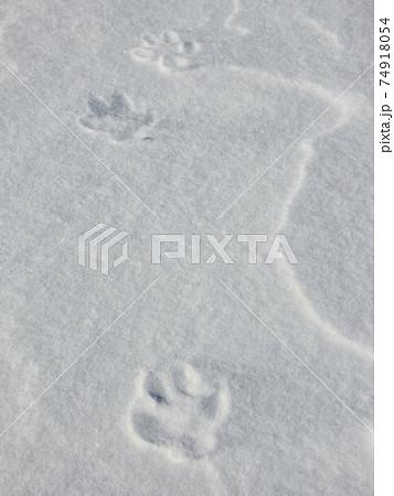 雪に残されたキツネの足跡(フットプリント) 74918054
