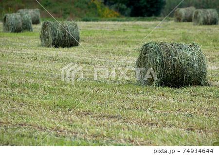 畜産にはなくてはならないタイコ状の牧草ロール 74934644