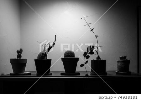 お洒落な鉢植え(コーデックスとサボテン) 74938181