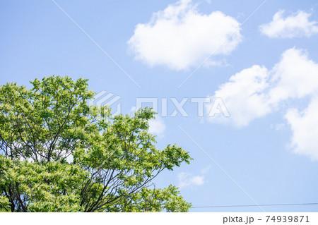綺麗な青空に新緑の緑 コピースペース 74939871