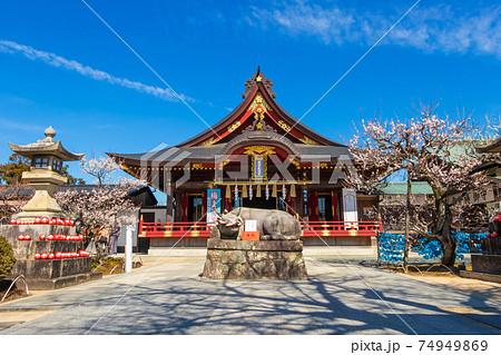 岩津天満宮、満開の梅〈愛知県岡崎市〉 74949869