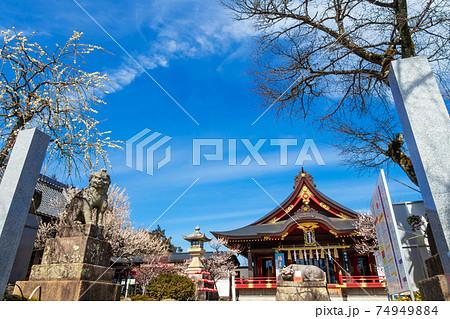 岩津天満宮、満開の梅〈愛知県岡崎市〉 74949884