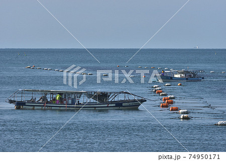 播磨灘のもぐり船 養殖海苔の刈り取り作業風景 74950171