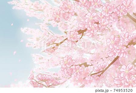 水彩タッチ 桜の木 背景 和風 素材 74953520