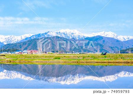 ツーリング(春):安曇野の水田と北アルプス 74959793
