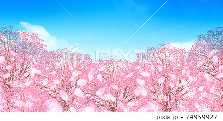 桜 春 風景 背景 74959927