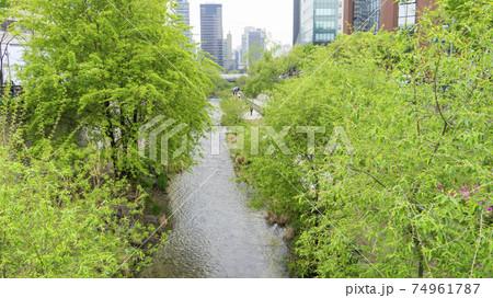 韓国・ソウル 都会の真ん中を流れる川と街路樹 74961787