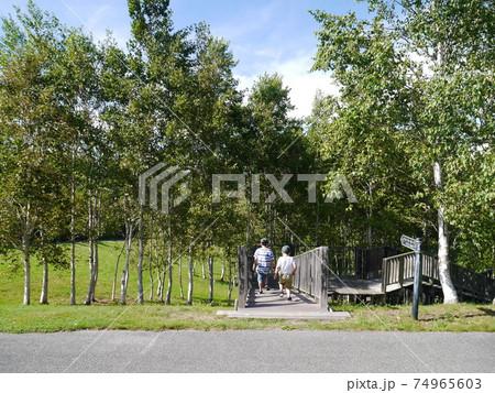 夏の緑溢れる北海道由仁町由仁ガーデンを散策する子ども(後ろ姿) 74965603