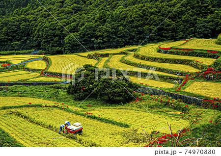 真紅のヒガンバナが畔に咲く初秋の稲田で最後の収穫を急ぐ農夫と農婦の姿がある日本の山里の原風景 74970880
