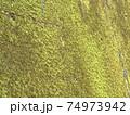 一面の苔壁まるで緑の絨毯 74973942