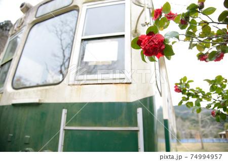 動かなくなった古びた電車の側に咲く赤い椿の大輪 74994957