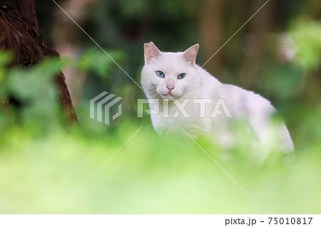 大阪城公園での野良猫 75010817