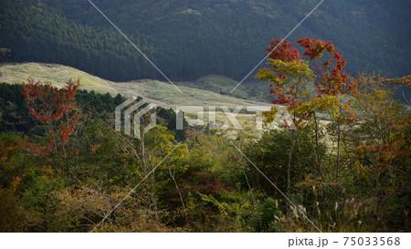 箱根湿生花園から眺める仙石原のススキ草原 75033568