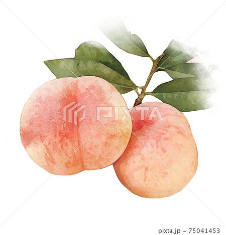 桃 もも 水彩画風-果物 75041453