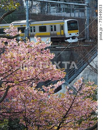 神田川沿いに咲く桜と総武線 75049033