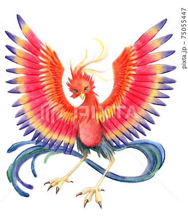 翼を広げるフェニックス 75055447