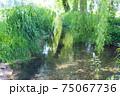 green landscape 75067736