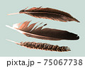 feathers on white background 75067738