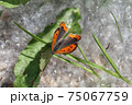 butterfly and poplar fluff 75067759