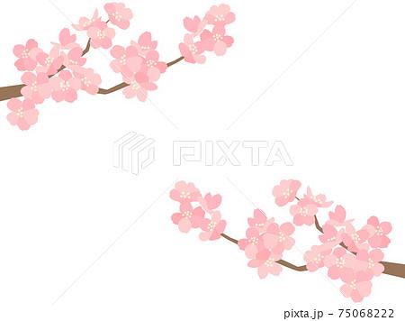 さくら116 桜 75068222