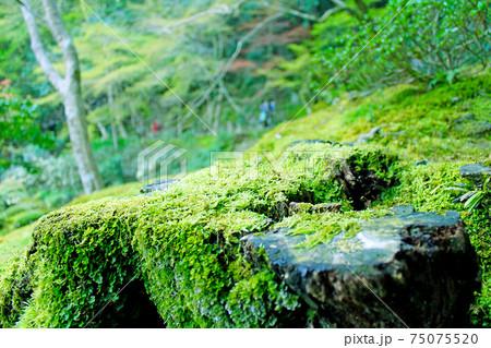 【京都】南禅寺発祥の地 南禅院の苔むした庭園 75075520