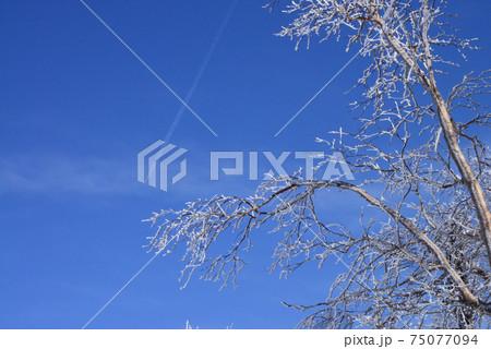 霧氷の広がる冬の八幡平上空を北に向かう飛行機雲 75077094