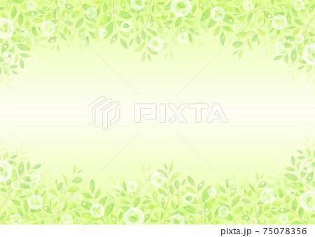 背景素材_木の葉 新緑 若葉 青葉 75078356