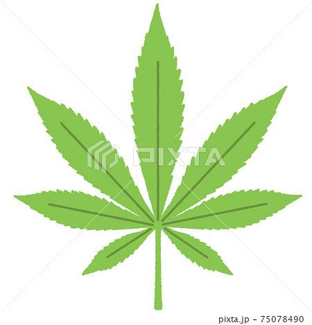 大麻のイラスト 75078490