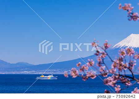 (静岡県)富士山を背に、河津桜咲く土肥港に向かう駿河湾フェリー 75092642