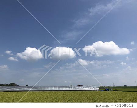 青空に浮かぶ小さな雲と田んぼの風景 75109613