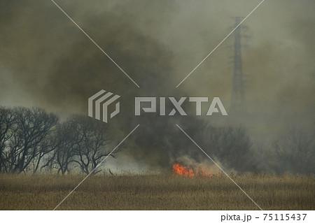 送電線の鉄塔に渡良瀬遊水地のヨシ焼き 75115437