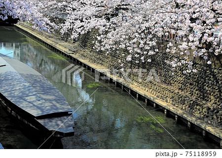 春の水門川・86(岐阜県大垣市) 75118959
