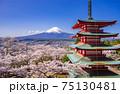 Chureito red pagoda with sakura in foreground and mount Fuji in background, Fujiyoshida, Japan 75130481