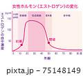 女性ホルモン量の変化 グラフ 75148149