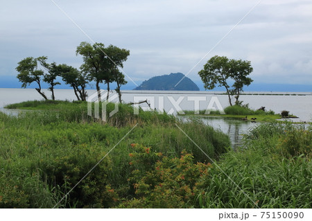 琵琶の湖に咲く蓮・64(滋賀県長浜市湖北) 75150090