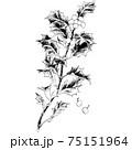植物画 - ヒイラギ 75151964