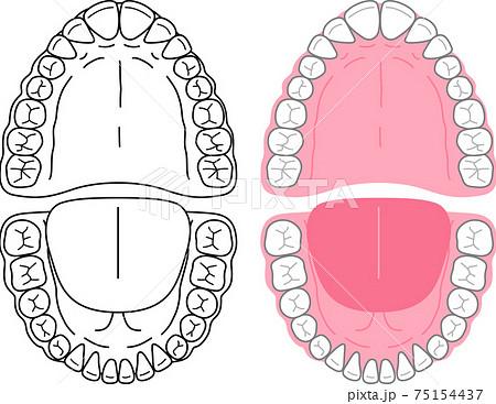 口腔内と歯のイラスト 75154437