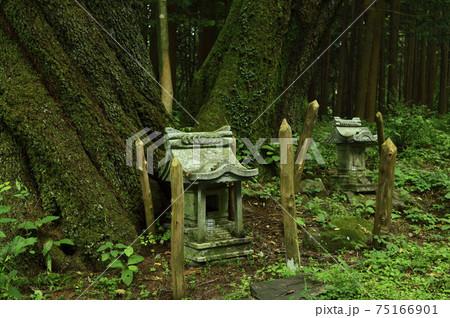 八ヶ岳(長野県・日本・夏・2020年) 75166901