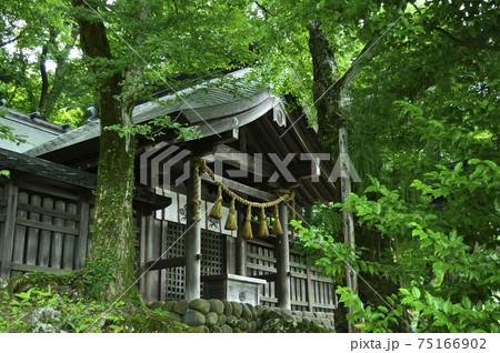 八ヶ岳(長野県・日本・夏・2020年) 75166902