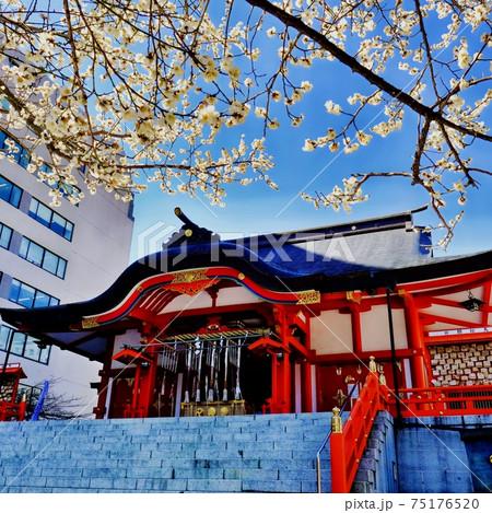 新宿 花園神社 75176520