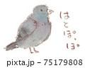 身近な鳥:鳩(ドバト・カワラバト) 75179808