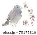 身近な鳥:鳩(ドバト・カワラバト) 75179810