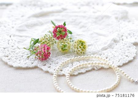 真珠のネックレスとスイートアリッサム 75181176