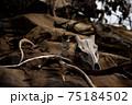 動物の毛皮と骨と鹿の角 75184502