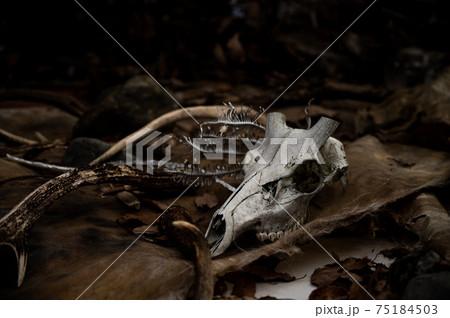 動物の毛皮と骨と鹿の角 75184503