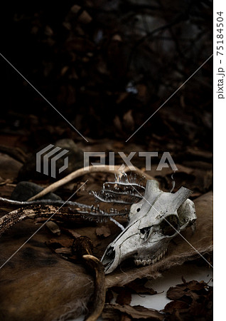 動物の毛皮と骨と鹿の角 75184504